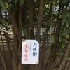 「ポケモンの巣: 桃井原っぱ公園」の回