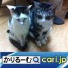 3密(密閉、密集、密接)の回避 店が変わった cari.jp