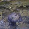 多摩動物公園 モグラ