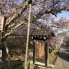 季節の便り:高遠城址公園の桜 [No.2021-S006]