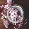 春の準備リスト(備忘録)