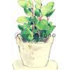 植物 水彩イラスト 園芸 観葉植物