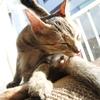 猫のいる休日(サイコーです!!)