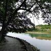 豊橋公園の緑
