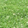 週末ライフ。「緑の春色に覆われて、大地が芽吹きを営む頃に宙を舞う蝶の姿もそこにあり、夏も近づく若葉の候」の巻。