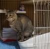 プーチンさん(猫)の4代目トイレはデオトイレのハーフカバー