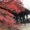 真如堂の紅葉 -京都テイクアウトグルめぐり⑦