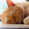 睡眠の大切さを伝えたい。日中の眠気は不健康の証?眠くならないだけで毎日が全く変わってくる。