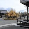 京都「西本願寺」大銀杏