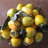 渋柿は20個あった。