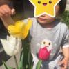 チューリップ経過その②(3/28~現在)&姪甥のチューリップ偽装工作ミッション