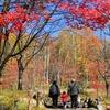 飛騨の秋景色 『新穂高ロープウェー』