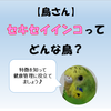 【鳥さん】セキセイインコってどんな鳥?