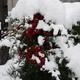 日曜日は大雪でした