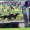 JRAカフェ、ダノンだけじゃない! アメリカンファラオ産駒に「芝の大物候補」誕生は、世界を席巻する合図!? 欧州最強馬を米3冠馬が超えるか