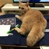 刺繍と猫その2