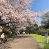 小石川植物園9