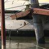 手賀沼公園ボート乗り場のカワセミ