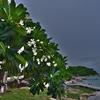サメット島 中部 いくつもある隠れ家ビーチ 「アオ ティアン Ao Thien ビーチ」