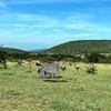 【サファリツアー2日目⑤】マサイマラ国立公園からナイバシャ湖へ。~仲間との別れ~