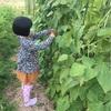 収穫🥕畑にて