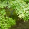 緑の美しい京都から