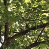 石神井公園の鳥たち