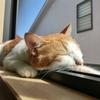 行ってみたい!猫カフェ MoCHA(モカ)