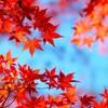 紅葉時期の箱根をフリーパスで観光★平日でも大混雑‼