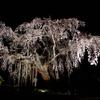 【一眼レフ】栃木県にある太平山で夜桜撮影