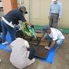 緑化ボランティア:パンジーの種まき