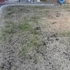油かすとピートモスと腐葉土を追加