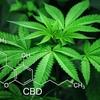 CDBMAXの副作用や大麻成分の危険性は本当に大丈夫?