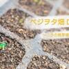 ニラの発芽確認~播種から発芽までの条件と期間は??~ベジオタ畑Day5