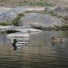 2月上旬:多摩川周辺をお写んぽ。 その1