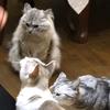 【伊豆旅行】伊豆高原の猫のいるお宿 プチホテル フロマージュに行って来ました。