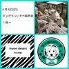 本日 4月4日(日) 埼玉県 春日部市 ドッグランいそべ販売会 開催します (^-^)