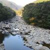 カワガラス  名貫川の岩の紋との水の紋