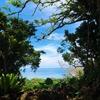【沖縄本島】海に入らない人でも楽しめる観光スポットはここ!
