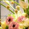 ふんわり花。その1「ラナンキュラス編」