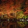土岐市曽木公園の逆さ紅葉