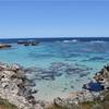 【パース観光】ロットネスト島でのサイクリングは至高であり、クオッカは可愛すぎた。