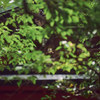 夏の赤山禅院