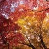 箱根の紅葉ーその2