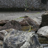 五位鷺とコサギは見られたがカルガモの雛は影も形もない