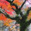 「まほろば」と歌詠みたちの光芒(奈良公園、春日大社、興福寺)