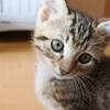 浮気してきました☆保護猫カフェBoni's House満喫記2