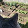 【家庭菜園2019】野菜は小さな実りを迎え、雑草も生い茂る〜