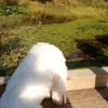 犬レプトスピラ症