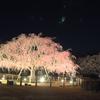 日本庭園@しあわせの村 神戸   夜桜ライトアップ(期間限定) に行ってきた。
